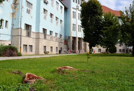 Bihorel: O nouă specializare la Sorbonica, Facultatea de Drujbași