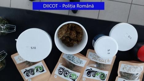 Percheziţii în Oradea şi Iaşi la două magazine cu produse din cannabis (FOTO)