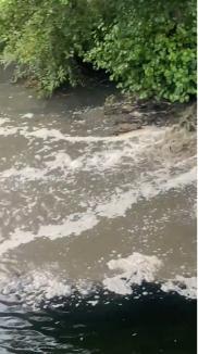 Poluare pe Crişul Repede, din cauza unei avarii la reţeaua de canalizare menajeră: Garda de Mediu a cerut intervenţia Companiei de Apă şi ABA Crişuri (FOTO/VIDEO)