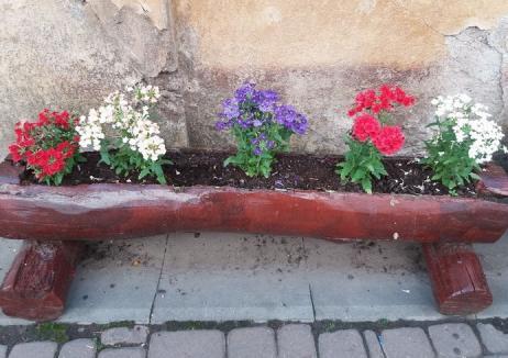 Atac la flori! O hoaţă surprinsă de camerele Casei de Cultură Salonta a devenit vedetă pe Facebook (FOTO / VIDEO)