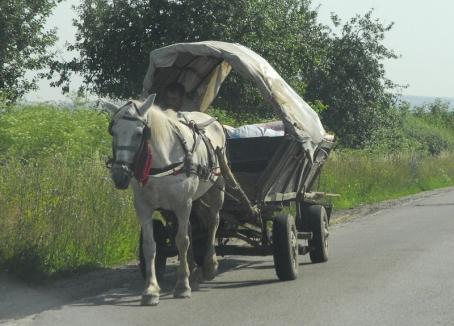 Nu i-a trebuit maşină: Un bărbat din Valea lui Mihai a furat calul şi căruţa unui sătean din Şimian