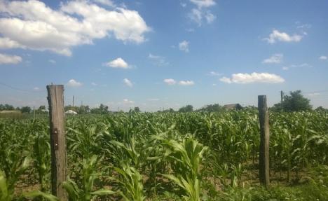 Se întâmplă în România: Un bărbat a reclamat că i-a dispărut casa, iar pe terenul său creşte acum porumb