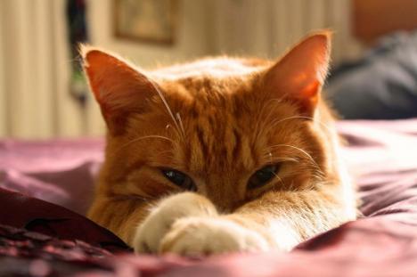 De dragul felinelor: Bihorenii, invitaţi la un târg caritabil cu produse handmade, pentru adăpostul de pisici