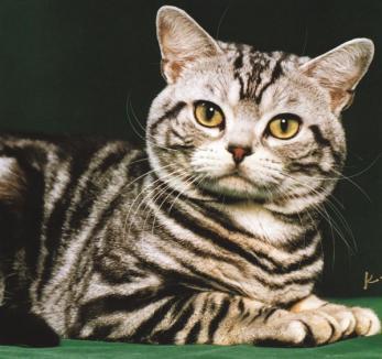 O pisică cu puteri paranormale a prezis 50 de morţi