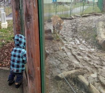 Blocaţi cu animalele: O orădeancă şi cei trei copii ai ei au fost închişi în Grădina Zoologică din Oradea!