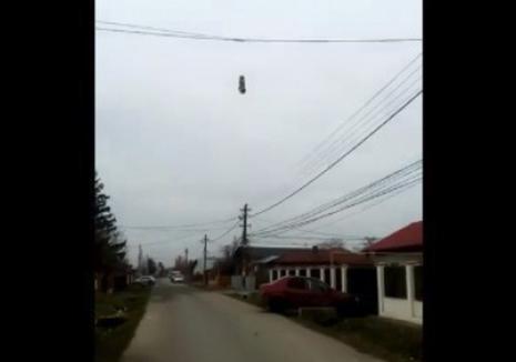 Căţeluş mort, spânzurat de cablurile de telefonie. Suspectul: un copil de 10 ani