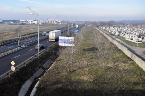Centură verde pe lângă cimitir: ADP Oradea va planta 1.000 de arbori