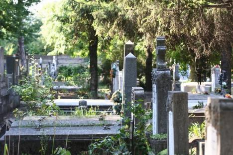 Arborii periculoşi din cimitir vor fi toaletaţi. Orădenii, aşteptaţi să depună cereri