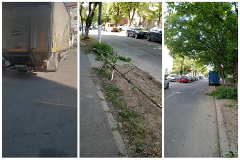 Ne enervează: Arborii netoaletați corespunzător, pericol pentru mașinile parcate (FOTO)