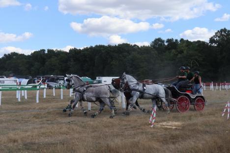 Concurenți din șapte țări în Oșorhei, la cea mai mare competiție de atelaje cu cai din România (FOTO / VIDEO)