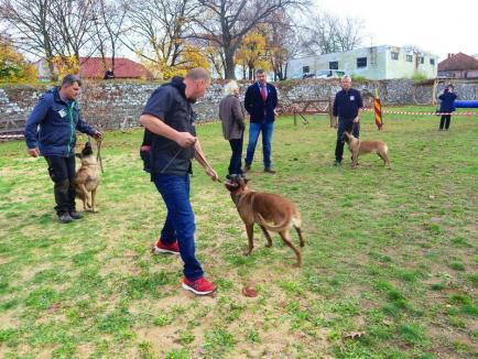 Cetatea câinilor: a început campionatul internațional de câini ciobănești belgieni și olandezi în Oradea (FOTO / VIDEO)