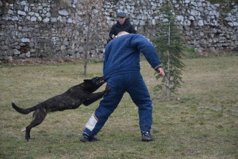 Campionatul câinilor isteţi: Cupa Braveheart Oradinum, cel mai mare concurs de mondioring din ţară, în şanţul Cetăţii (FOTO/VIDEO)