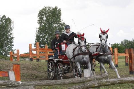 """""""Paradă"""" de cai la Cefa: Participanţii la concursul naţional de atelaje i-au vrăjit, pur şi simplu, pe spectatori (FOTO)"""