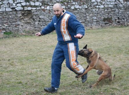 Toamna Cetăţii Orădene: Demonstraţii de dresaj canin, la cel mai mare concurs de mondioring din România