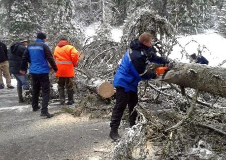 Zona Boga-Padiş a rămas fără curent, din cauza unui copac căzut peste cablurile de energie electrică