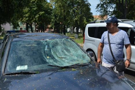 Furtuna, în Oradea: Un copac de pe strada Matei Basarab s-a prăbuşit peste o maşină în mers (FOTO)