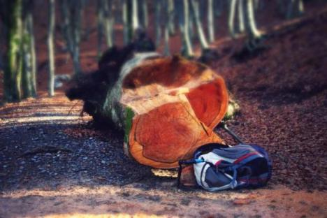 Tragedie la Surduc. Un tânăr de 18 ani a fost ucis de un copac în timp ce era la tăiat de lemne