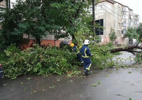 Copac căzut peste o maşină în Oradea