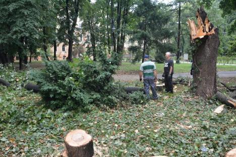 Răpus de furtună, un copac a distrus gardul noului Muzeu al Ţării Crişurilor (FOTO/VIDEO)