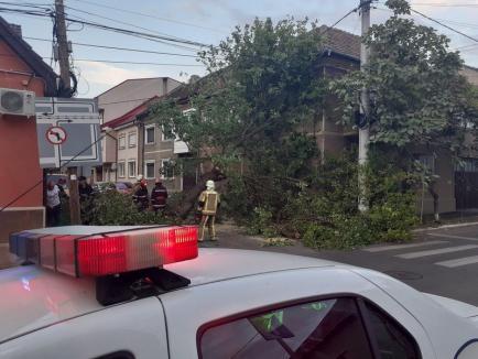 Vremea rea face pagube în Oradea: Copac căzut peste o casă, alți arbori au distrus maşini (FOTO / VIDEO)