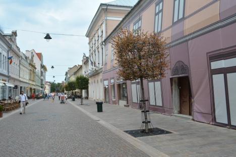 Ne enervează: Copacii 'pătraţi' din centrul Oradiei au fost lăsaţi de izbelişte (FOTO)