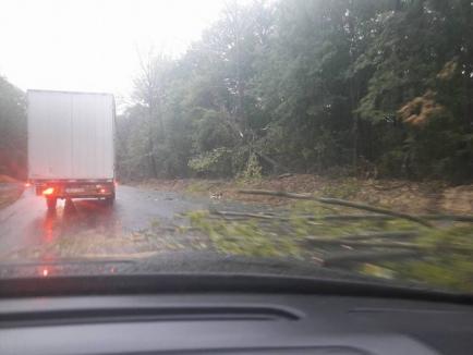 Urmele vijeliei: Mai mulţi copaci au fost doborâţi. Acoperişul unui bloc din Aleşd a fost smuls de vânt (FOTO/VIDEO)