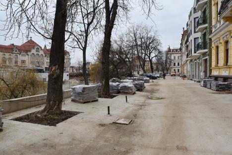 """Copaci... """"beton"""": Lucrările la Piața Libertății pun în pericol arborii din zonă (FOTO)"""
