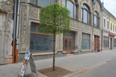 Model inedit: Copaci cu coroană cubică, plantaţi pe pietonala Alecsandri din Oradea (FOTO)