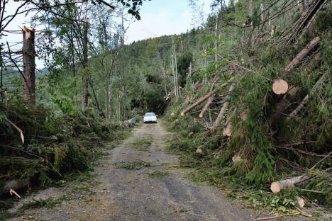 La peste un an de la mezo-ciclonul care a 'măturat' Bihorul, jumătate din copacii doborâţi de vânt sunt încă în păduri