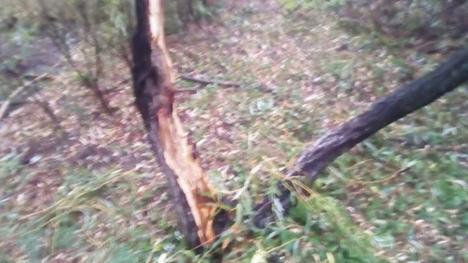 Cod portocaliu de furtuni în Bihor: Copaci rupți și stâlpi doborâți de ploi cu grindină (VIDEO / FOTO)