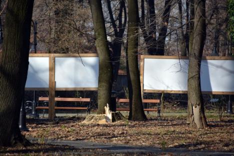 'Drujbofonie' molipsitoare! În curtea noului Muzeu, vecin cu parcul Bălcescu, au fost puşi la pământ 11 copaci (FOTO)