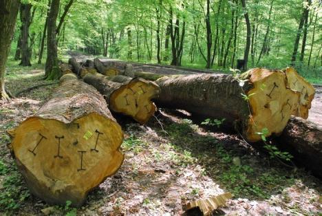 Direcţia Silvică Bihor, boicotată la licitaţia de vânzare a lemnelor din proprietate publică