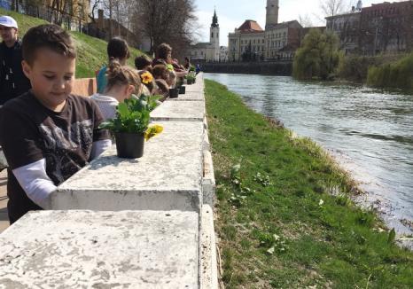 De Ziua Dunării, bihorenii sunt chemaţi să planteze flori pe malul Crişului