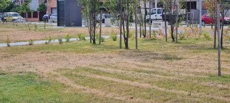 Verde PNL: Gazonul şi o parte din arborii din parcul nou de pe Barcăului s-au uscat (FOTO)