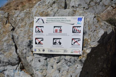 Poartă spre altă eră: La doi paşi de Oradea, avenul Betfia găzduieşte o rezervaţie paleontologică, cu fosile glaciare şi colonii imense de lilieci (FOTO)