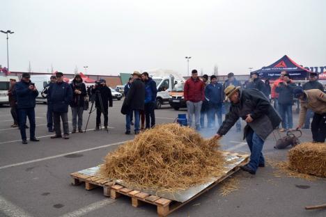 D'ale porcului: 25 de echipe din Bihor şi de dincolo de graniţă se întrec la preparat cârnaţi, caltaboşi, toroş şi jumări (FOTO/VIDEO)