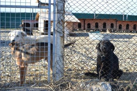 """Scandalul maidanezilor ucişi: Procurorii, în anchetă la Adăpostul """"Grivei"""", pentru cruzime împotriva animalelor! (FOTO)"""