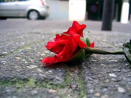 Speculanţii imobiliari au 'ofilit' trandafirii