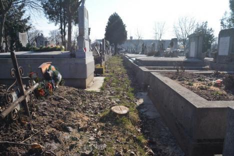 ADP Oradea 'explică' defrişările din cimitir: Copacii trebuie tăiaţi... ca să nu crească prea mari!