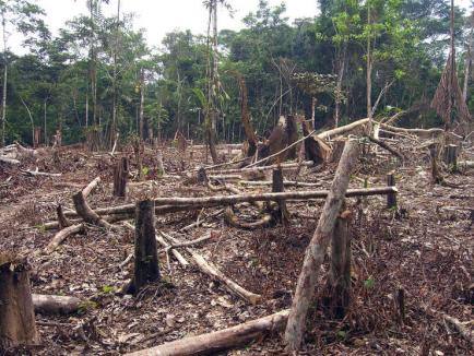 Cuiva îi pasă: Comisia Europeană dă ultimatum României să stopeze tăierile ilegale de păduri