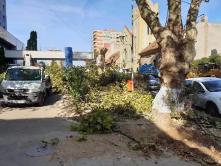 Lucrările la pasajul de pe Magheru: Defrişările se încheie joi, cu tăierea ultimilor cinci copaci din zona şantierului (FOTO)