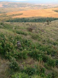 Mafia drujbelor: În Lugaşu de Jos primarul şi localnicii sunt terorizaţi de pădurarii hoţi (FOTO / VIDEO)