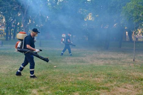 """""""Ceața caldă"""", folosită în premieră în Oradea pentru stârpirea ţânţarilor şi altor insecte (FOTO / VIDEO)"""