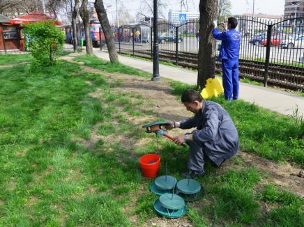 Feriţi animalele şi copiii! Primăria Oradea demarează joi deratizarea cu momeli otrăvite