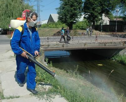 În sfârşit! Între 22-25 mai e programată dezinsecţia zonelor publice din Oradea şi tratamentul fitosanitar al arborilor