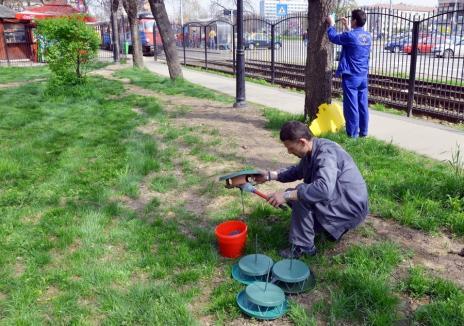 Feriți copiii şi animalele! Municipalitatea va deratiza săptămâna viitoare spaţiile publice din Oradea