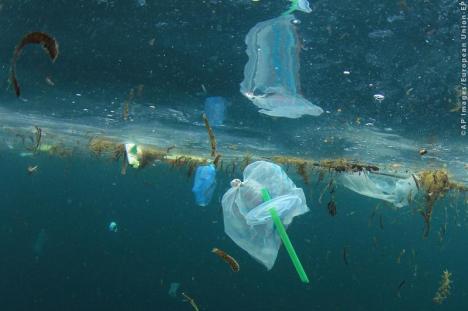 Adio, pahărele şi farfurii din plastic! Articolele de unică folosinţă vor fi interzise