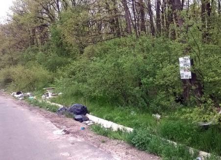 La munca de jos: Angajații Direcției Tehnice de la Consiliul Județean Bihor au ajuns să curețe gunoaie!