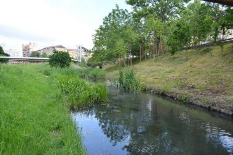 Ape de rahat: Pârâurile Peţa şi Adona sunt pline cu fecale şi alte resturi menajere, scurse din reţeaua de canalizare pluvială a Oradiei (FOTO)