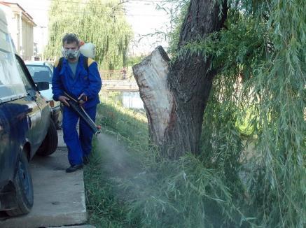 Scăpăm de ţânţari! Săptămâna viitoare începe prima etapă a lucrărilor de dezinsecţie